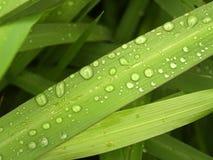 11片绿色叶子 免版税库存照片