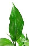 11片绿色叶子 免版税库存图片