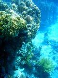 11珊瑚 免版税库存照片