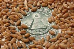 11货币麦子 库存照片