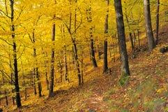 11 φθινόπωρα αφήνουν το αριθ Στοκ Φωτογραφία