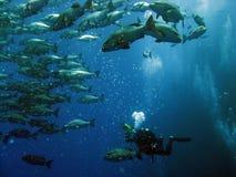11 подводное Стоковая Фотография
