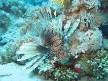 11 рыба Стоковая Фотография