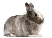 11 старого месяц усаживания кролика Стоковое Изображение RF