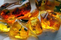 11 янтарное сырцовое Стоковая Фотография