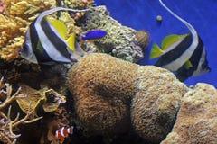 11 akvarium monterey Arkivbilder