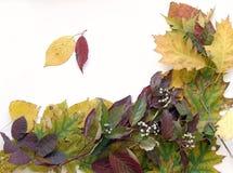 11 liści jesienią Obraz Royalty Free