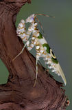 11 mantis ακανθωτά Στοκ φωτογραφία με δικαίωμα ελεύθερης χρήσης