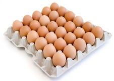 11 nya ägg Arkivfoto