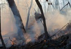 11 pożarniczy lasowy stłumienie obraz stock