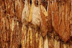11 tytoniu Obraz Royalty Free
