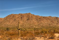 114片沙漠山 库存图片