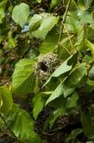 115 ptak Fotografia Stock