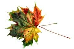 12个秋天颜色 免版税库存照片