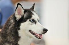12个竞争宠物系列 免版税库存照片