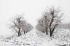 12月冻结的结构树 免版税库存图片