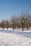 12月果树园 免版税图库摄影
