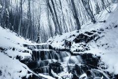 12月自然公园花露水 库存照片