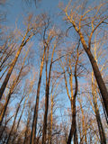 12月高大的树木 免版税库存照片