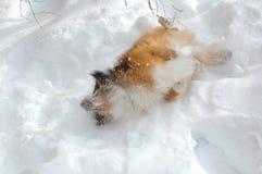 12条狗雪 库存图片