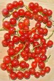 12浆果无核小葡萄干 免版税库存照片