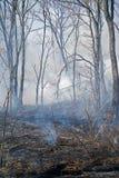 12火森林 库存图片