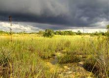 12片沼泽地横向 库存照片