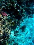 12珊瑚 库存图片