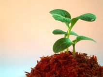 12生长结构树 免版税库存图片