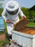 12蜂农 库存照片