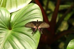 12蝴蝶 库存图片