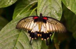 12蝴蝶 免版税库存照片