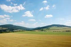 12麦地 库存照片