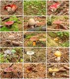 12 грибов лета Стоковые Фотографии RF