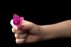12 руки Стоковая Фотография RF