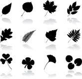 12 установленного листь икон Стоковое Изображение RF