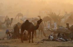 12 2009 верблюдов справедливый ноябрь puskar Стоковое Изображение