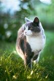 猫12 图库摄影