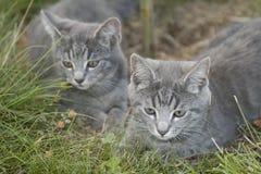 12猫 免版税库存照片