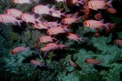 12 andaman珊瑚海惊奇的世界 库存照片