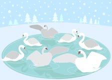 12 dagen van Kerstmis: 7 zwanen het Zwemmen Royalty-vrije Stock Fotografie