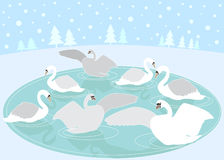 12 Days of Christmas: 7 Swans a Swimming Royalty Free Stock Photography