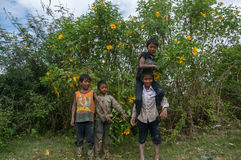 12,Dec,2016 - The kid from Churu people play in flowering shrubs of sunwild flower near  by Dalat- Lam Dong- Vietnam Royalty Free Stock Photo