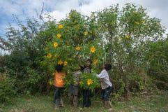 12,Dec,2016 - The kid from Churu people play in flowering shrubs of sunwild flower near  by Dalat- Lam Dong- Vietnam. Some kids of Churu people drafting the fish Royalty Free Stock Photo