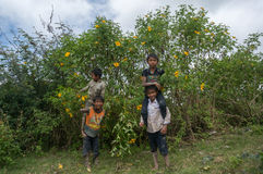 12,Dec,2016 - The kid from Churu people play in flowering shrubs of sunwild flower near  by Dalat- Lam Dong- Vietnam. Some kids of Churu people drafting the fish Royalty Free Stock Photography