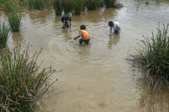 12,Dec,2016 - The kid from Churu people play in mud, they catching the fish near by Dalat- Lam Dong- Vietnam. Some kids of Churu people drafting the fish near by Stock Image