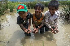 12,Dec,2016 - smile of kids from Churu people play in mud, they catching the fish near by Dalat- Lam Dong- Vietnam. Some kids of Churu people drafting the fish Royalty Free Stock Photography