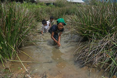 12,Dec,2016 - smile of kids from Churu people play in mud, they catching the fish near by Dalat- Lam Dong- Vietnam. Some kids of Churu people drafting the fish Stock Images