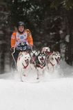 12. Europäisches sleddog laufende Meisterschaft Slowakei Stockfotos