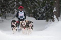 12. Europäisches sleddog laufende Meisterschaft Slowakei Lizenzfreies Stockfoto